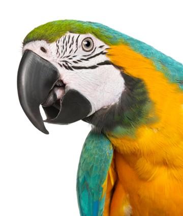 Harmony House Parrot Treats