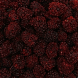 Freeze Dried Blackberries (25 Lb. Wholesale Box)